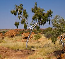 Ghost Gum at Devils Marbles by Steve Bass