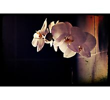 Orchid Flowers Photographic Print