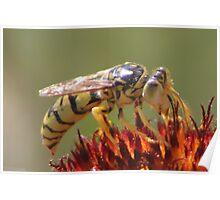 Hornet On Firewheel Poster