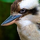 Laughing Kookaburra by Renee Hubbard Fine Art Photography