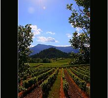 Vineyards by Neutro