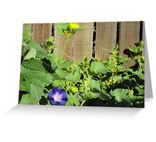 Morning Glory Delight Greeting Card