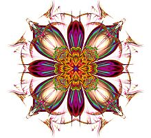 Star Flower by Pam Amos