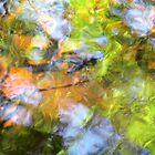 Rainforest Reflections by Kathie Nichols