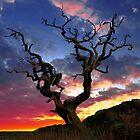 Shimmering Silhouettes Calendar by David Alexander Elder
