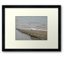 All by myself - Cardwell, North Queensland, AUstralia Framed Print