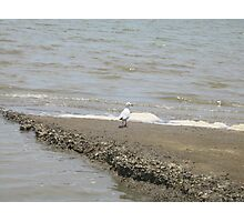 All by myself - Cardwell, North Queensland, AUstralia Photographic Print