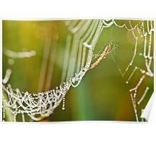 Morning dew..... Poster