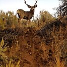 Nevada Mulie by doubleheader