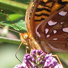 Close To A Butterfly by Misty Lackey