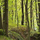 The forest along the Rhone river by Patrick Morand