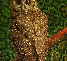 Northern spotted owl by © Kira Bodensted