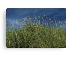 Dune Grass landscape Canvas Print