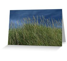 Dune Grass landscape Greeting Card