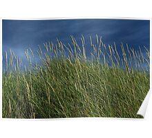 Dune Grass landscape Poster