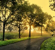Trees in Morninglight by ienemien