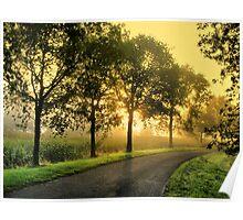 Trees in Morninglight Poster