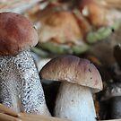 Favourite Mushrooms by karina5