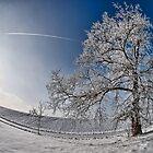 Frozen Paradise 3 by Željko Malagurski