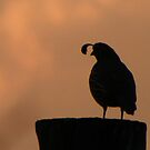 Guardian Quail Silhouette by Betty E Duncan © Blue Mountain Blessings Photography