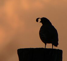Guardian Quail Silhouette by BettyEDuncan