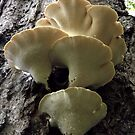 Dryad's Saddle by Rusty Katchmer