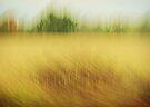 Canadian Fields by JKKimball