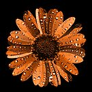 Orange flower with water drops by Nasko .