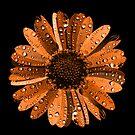 Orange flower with water drops by Nasko .