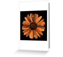Orange flower with water drops Greeting Card