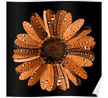 Orange flower with water drops Poster