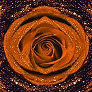 Orange rose with water drops  by Nasko .