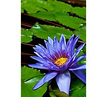 Nymphaea Director George T Moore  Photographic Print