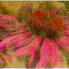 Textured Coneflower by Susan Humphrey