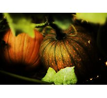 Harvest Time Photographic Print