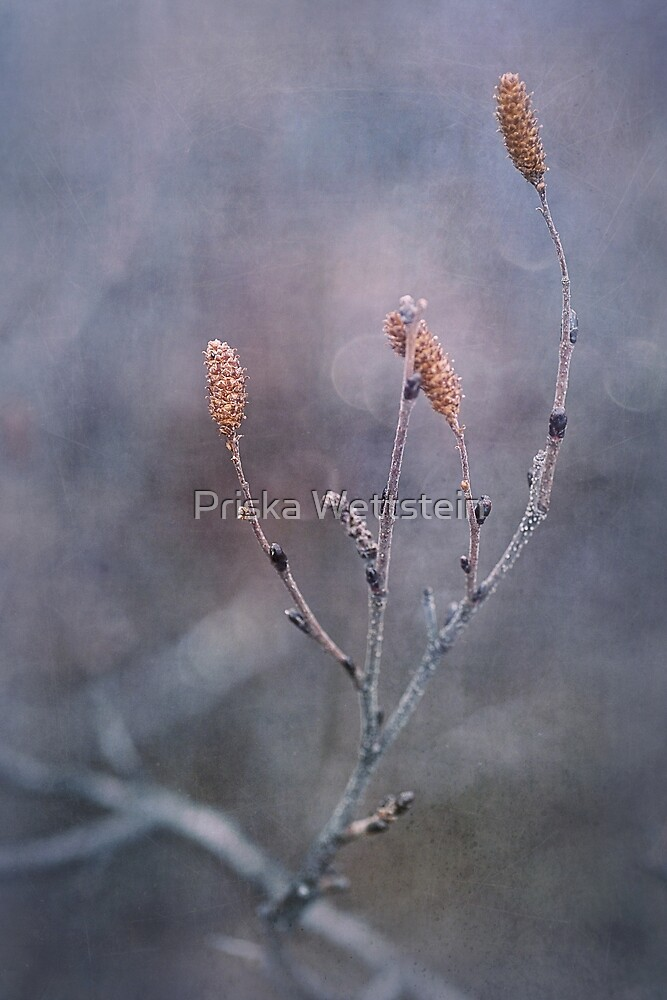 it's going to be winter soon by Priska Wettstein