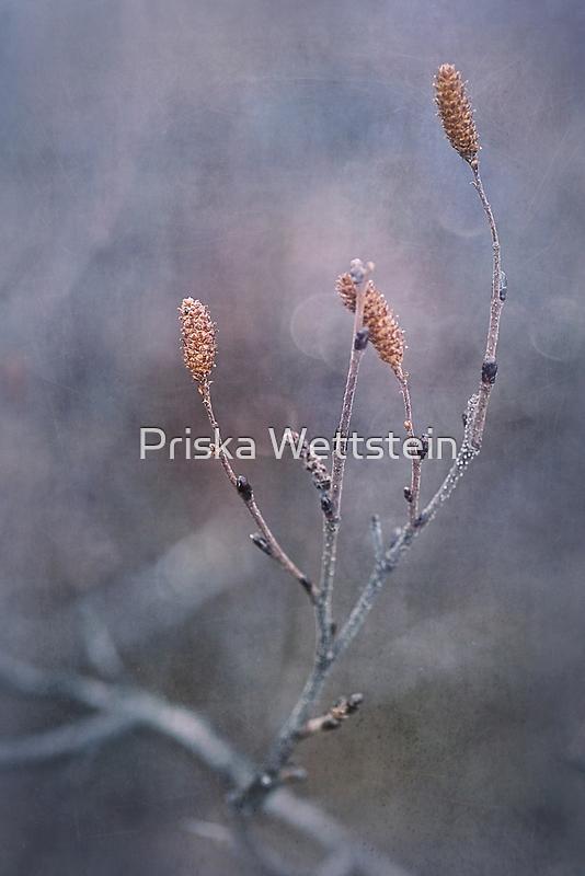 it's going to be winter soon by Priska Wettstein