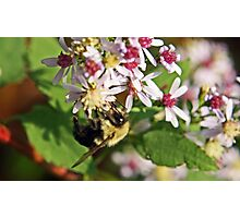 Wildflower Admiration Photographic Print