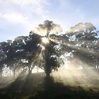 ~ Sunburst ~ Oakbank ~ by LeeoPhotography