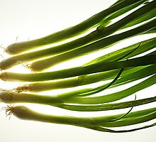 Green onions by Roland Mueller