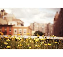 Flowers Along the High Line - New York City Photographic Print