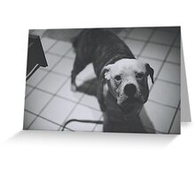 Molly-Milly Greeting Card