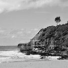 Lone Tree @ Warriewood by Jason Ruth