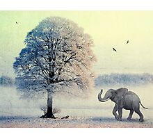 Oaky and Friends Photographic Print