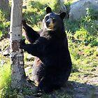 Pole Dance Anyone??? by vette
