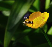 Buttercup by Stephen Gregory