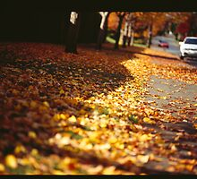 Street leaves  by JasPeRPhoto