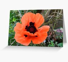 Late poppy! Greeting Card