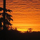 paw paw trees and sunrise - Kennedy, North Queensland, Australia by myhobby