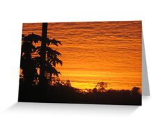 paw paw trees and sunrise - Kennedy, North Queensland, Australia Greeting Card